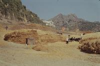 Ernte in Moulay Idriss, 1962 Czychowski/Timeline Images