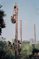 Bamboukbutterbaum in Tiebissou , 1971 Czychowski/Timeline Images