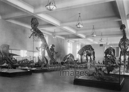 Dinosaurier im Naturkundemuseum in New York, 1927 Timeline Classics/Timeline Images