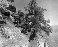 Esel im Grand Canyon, 1927 Timeline Classics/Timeline Images