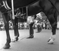 Horse Guard in Whitehall in London, 1964 Juergen/Timeline Images