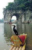 Kormoran am Elephant Hill bei Guilin Raigro/Timeline Images