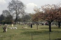 Park in London, 1960 hgra60/Timeline Images