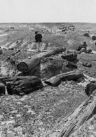 Petrified Forest National Park in Arizona, 1928 Timeline Classics/Timeline Images