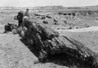 Petrified Forest National Park in Arizona, 1929 Timeline Classics/Timeline Images