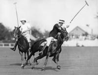 Pferdesport: Polo 1918-1945 Timeline Classics/Timeline Images