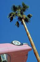Pink Cadillac und Palme, 1993 Raigro/Timeline Images