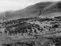 Rinderherde in Wyoming, 1929 Timeline Classics/Timeline Images