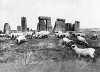 Schafe bei Stonehenge in England, 1933 Timeline Classics/Timeline Images