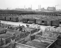 Union Stockyards in Chicago, 1927 Timeline Classics/Timeline Images