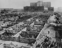 Union Stockyards in Chicago, 1938 Timeline Classics/Timeline Images