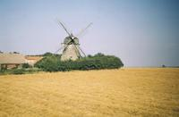Windmühle in Dänemark, 1966 HRath/Timeline Images