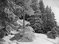 Winterwald, 1910 Timeline Classics/Timeline Images